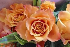 Bouquet of orange roses (rosberond) Tags: flowers roses orange closeup photostream iphone