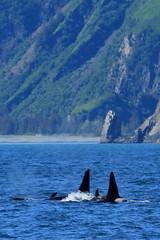 Alaska fb 191 (paustjohn.photography) Tags: basketball alaska kettle orca lutheran moraine kml