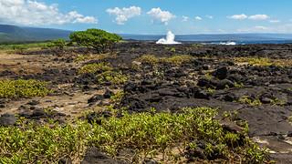 Lava Tree Wave