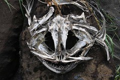 Almost a mask (10b travelling) Tags: black beach skeleton island skull iceland sand europe columns vik southern fisk basalt 2014 stulaberg reynisfjara carstentenbrink reynisfjoru iptcbasic