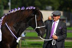 IMG_3897-k (Mandy Bramavi) Tags: show horse shire