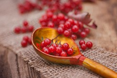 snowballtree (olli_loo) Tags: snowballtree russianspoon spoon woodspoon wood manual manuallens manualfocus macro softlens softbokeh autumn autumnbeauty autumncolours russian promura promura135 135mm foodphoto russianfood stilllife stillphotography foodphotography redmatrix