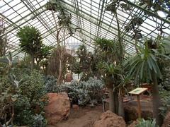 Pflanzen (schremser) Tags: sterreich wien wstenhaus schnbrunn pflanzen palmen kakteen kaktus