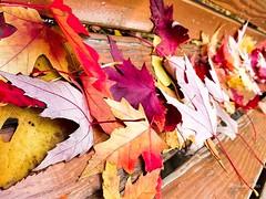 Feuilles d'automne (Yakimo Bohio) Tags: fujifilm automne x20 feuilles