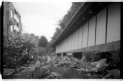 Acros100-2-35 (splendid future) Tags: kyoto yenlifefilm film filmphotography    filmlover nikon f3 fujifilm acros100