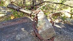 barbed wire barrier_3 (Tony Markham) Tags: barbedwirebarrier militaryhistorymilitaryhistory military 10bfiretrail 10b sevencreekstrack dharawalnationalpark dharawal