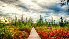 Paint by Numbers (flashfix) Tags: october012016 2016 2016inphotos nikond7000 nikon ottawa ontario canada 55mm300mm trail green yellow red boardwalk merbleue lamerbleue bog layered clouds landscape nature mothernature morning sunrise lines autumn seasons fall panorama