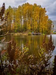Gold Crop (briantolin) Tags: lafargelakecoquitlam coquitlam lake autumn falltrees october nature foliage