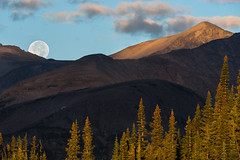 The Harvest is In (courtney_meier) Tags: moon moonset fullmoon harvestmoon september colorado coloradorockies indianpeaks indianpeakswilderness wilderness morning morninglight dawn sunrise autumnsunrise forest subalpine alpine mountains mountainlight rockymountains southernrockies