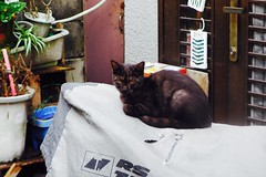 Today's Cat@2016-10-04 (masatsu) Tags: cat thebiggestgroupwithonlycats catspotting pentax mx1