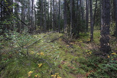 IMG_9422 (ctmarie3) Tags: banffnationalpark lakeminnewanka stewartcanyon trail