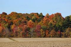 Fall Landscape (pegase1972) Tags: landscape fall autumn automne tree nature qc qubec quebec montrgie monteregie canada
