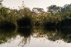 South Africa 2016 (mcmessner) Tags: adventure africa bj boat grass reflection river sunrise sunriseboatride tongabezi tongabezilodge water zambeziriver zambia livingstone