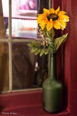 window sill (melike erkan) Tags: stilllife sunflower gallery artisanworks art window artificial
