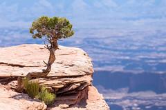 Utah-101 (akalte) Tags: canyonlandsnationalpark islandinthesky utah