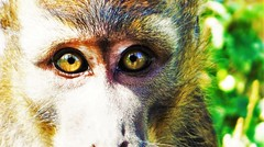 Curious Buddy (judgenobles) Tags: wild animal monkey little nature shocked surprise stare stares eyes curios curious green brown reflection king cute perfdct earth precious model photogenic flickr