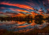 Sunrise Pano (DonMiller_ToGo) Tags: sunrise rookery hdrphotography nature goldenhour panorama florida panoimage4 5xp panoramic onawalk outdoors clouds hdr d810 venicerookery sky