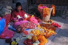 flower seller...... (shingola) Tags: dogs man kathmandu flower seller