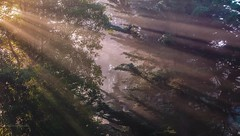 Streaming (captured views) Tags: forest capturedviews capturedviewsphotography capturingthelivinglandscape sunrays sunthroughthetrees morning light morninglight californiamorning streaminglight lightthroughthetrees naturesatmosphere nature naturescomposition naturesart atmosphere atmosphericlight