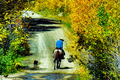 COWBOY HEAVEN (Aspenbreeze) Tags: cowboy cowboys rancher ranchhand horse dog dirtroad rural country countryroad autumn cowboyhat mountainscape ranch colorado bevzuerlein aspenbreeze moonandbackphotography