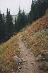 Francis Bowman Trail 15, Eagle Cap Wilderness 2016 (Sara J. Lynch) Tags: sara j lynch eagle cap wilderness wallowas eastern oregon laverty lakes francis bowman trail mountains trees nikon 35mm film