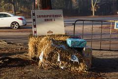 Ze zijn met de bus vertrokken. (limburgs_heksje) Tags: nederland niederlande netherlands noord brabant beekse bergen safaripark dierenpark