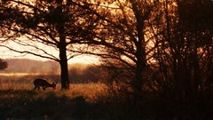 *** (pszcz9) Tags: polska poland przyroda nature natura pejza landscape zachdsoca sunset wieczr evening wiosna spring beautifulearth sony a77