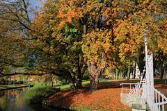 Autumn in Medemblik (Harry Kool) Tags: autumn herfst leaves colors weer rain air canon eos weather