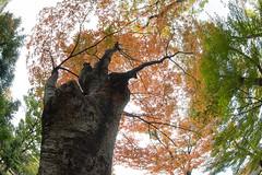 Osaka Castle Park (nak.viognier) Tags: osakacastlepark  olympusepl3 lumixgfisheye8mmf35
