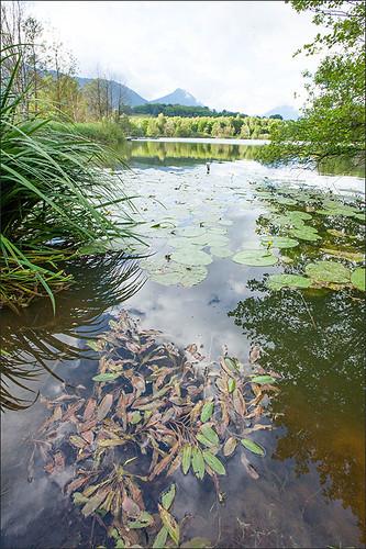 C1.2410=22.431 Formations flottantes à larges feuilles à Potamogeton coloratus Savoie