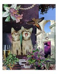 Gemini - StarCat (tjager) Tags: astrology zodiac gemini starcat twins livingferal cat kitten hummingbird pearl airsign catlover collage art analog