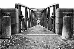 The runner (devos.ch312) Tags: runner bridge pedestrianbridge iron monument industrialarcheology protected protectedmonument pollare ninove flanders belgium architecture steel