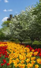 Le printemps (monilague) Tags: flowers trees red sky ontario tree apple yellow fleurs jaune rouge spring day tulips ottawa jour ciel arbres blossoming arbre printemps tulipes floraison pomier