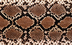 Snake skin (huayge) Tags: old wallpaper brown abstract detail macro art texture scale nature leather fashion animal closeup fauna contrast design pattern natural skin reptile snake background wildlife stripe conservation artificial creepy textile exotic hide scales tropical backdrop material python serpent rough piece coil predator viper biology rattlesnake textured slither snakeskin venom reptilian forked constrict