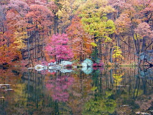 Pink Tree Reflection