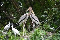 DSC_0062 (nimakhosravi) Tags: bird birds nikon couple sanctuary nima khosravi d5100