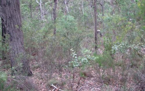 14C Yengo Road, Putty NSW 2330