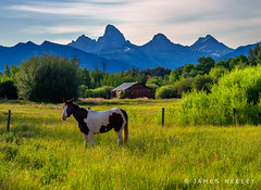 Take Me Home (James Neeley) Tags: landscape idaho grandtetons tetons tetonvalley jamesneeley