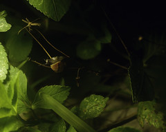 Creeps at Night (BigClownshoes) Tags: life macro nature grass spiders beetle snail insects bugs sonya55