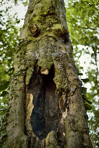 Scary Tree Face