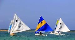 IMG_9812 (eric15) Tags: beach race cat surf sailing wind offshore competition surfing racing aruba international catamaran sail windsurfing regatta optimist sunfish 2014