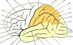 Anglų lietuvių žodynas. Žodis central nervous system reiškia centrinės nervų sistemos lietuviškai.