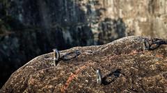 Grampos de Rapel/Escalada (Eduardo Gushiken) Tags: alpinismo rappel escalada rapel alpinism grampo cantareira dib