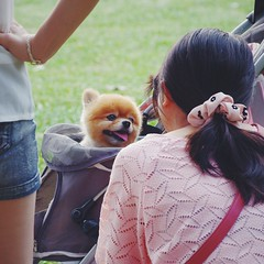 sooooo cute!!! () Tags: dog cute animal taipei     vsco vscocam