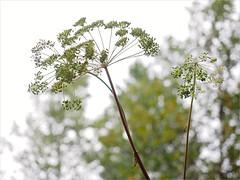 (Kirill & K) Tags: nature forest cloudy     bashkiria bluerocks summerautumn southural