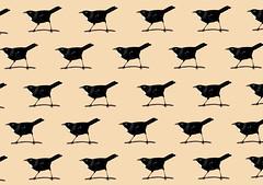 Tui pattern (Melissa Boardman) Tags: pattern surfacedesign patterndesign birdpattern tuibird tuipattern