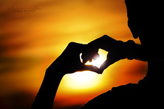 love ref (Md. Sakif ul alam) Tags: red love hend