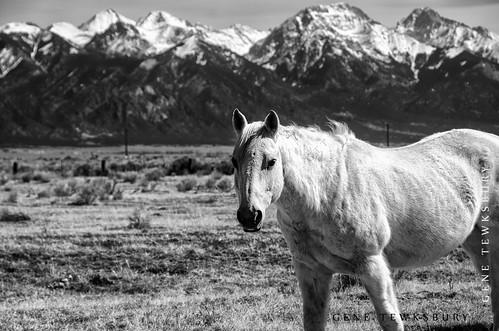 San Juan Horse