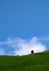 The Lonely Tree On The Green Valley 2 (HimynameisPaolo) Tags: life trip travel blue trees light wild summer vacation sky italy plants holiday plant tree travelling verde gre