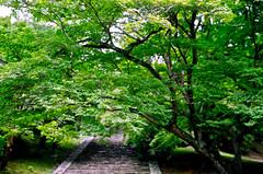 (aozora.umikaze) Tags: japan nara kisetsu kotoba aozora arigatou atarashii aratamete